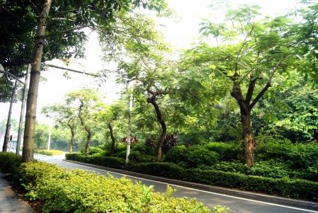 treelined: Tree-lined road