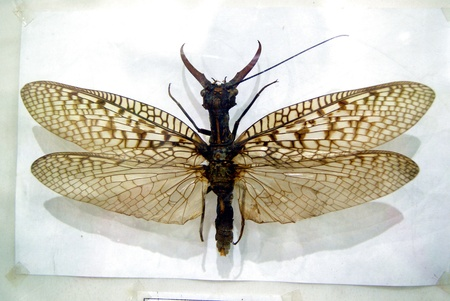 Insect specimens  Stock Photo