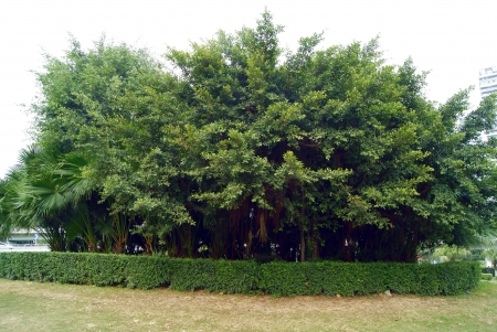 exuberant: Green belts and green trees