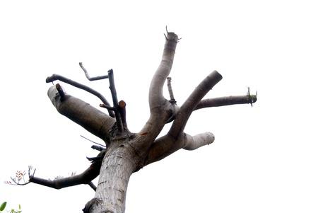 Les branches des arbres Banque d'images