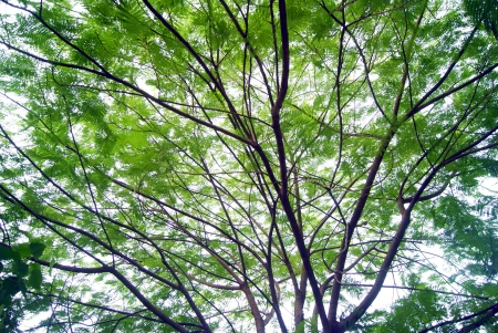 forested: Forested and green leaves  Stock Photo
