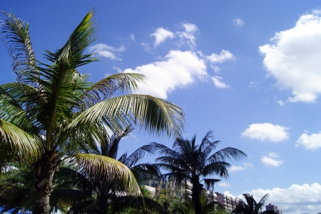 Blue sky and white clouds and the leaves of tree leaves