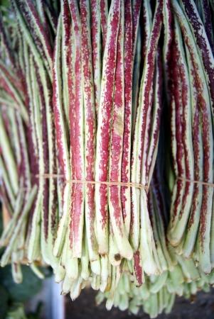 Long beans Stock Photo - 15057789