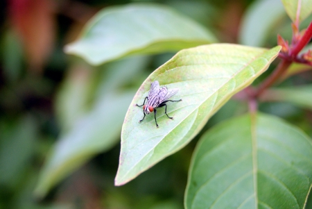 Flies and green leaves