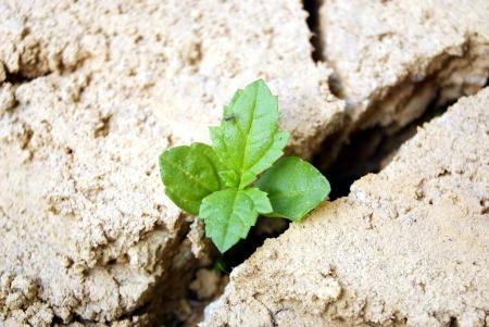 De bourgeon, le dess�chement de la terre