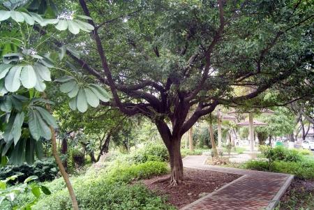 La arbres et le jardin paysage Banque d'images
