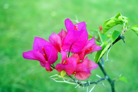 fleurs Banque d'images