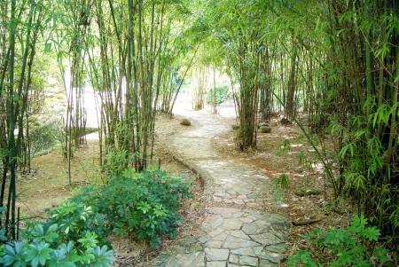 treelined: Tree-lined paths
