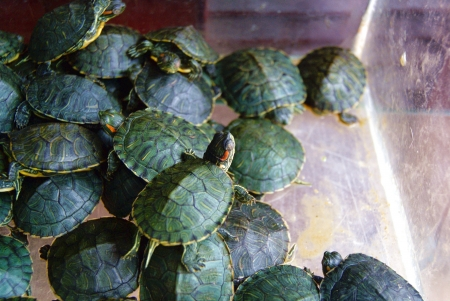 tortoise Stock Photo - 16703207
