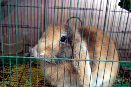 rabbit cage: A caged rabbit