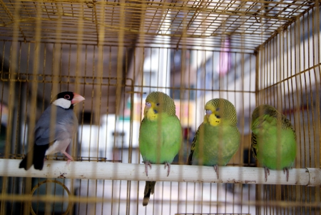 A caged parrot  photo