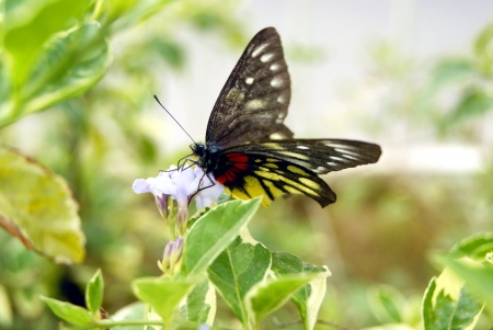 color butterfly: Color butterfly