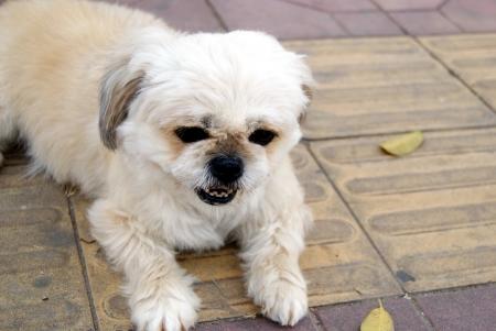 A lovely dog Stock Photo - 18616764