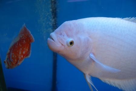 peces de acuario: Acuario de peces