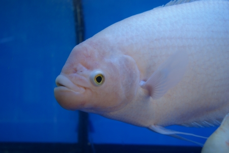 aquarium fish: Aquarium fish