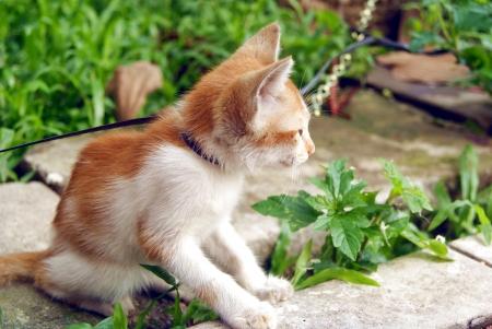 pussy cat: Pussy cat  Stock Photo