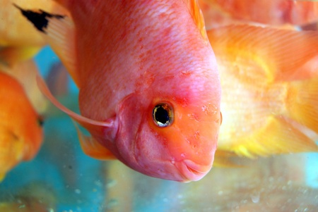 moving images: Closeup of fishes