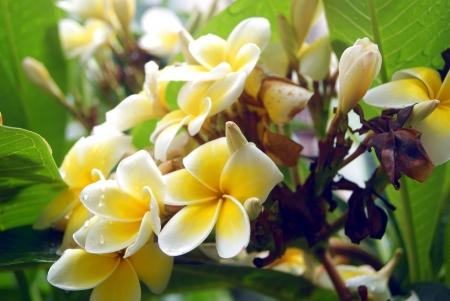 rui: flowers
