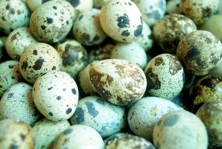 quail egg: Closeup of quail egg