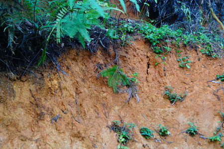loess: The mountain fern plant landscape