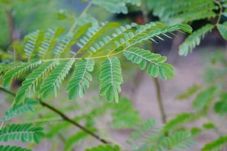 garden features: The green branches and leaves Stock Photo