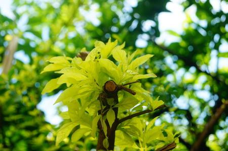 yeşillik: Green foliage