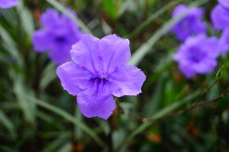 purple flowers: Purple flowers, very beautiful