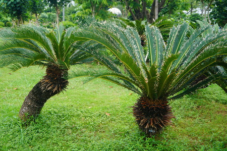 arbre paysage: Plant tree landscape