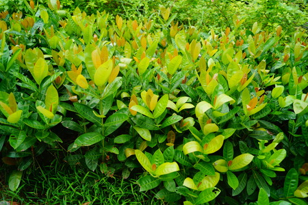 greening: Greening plants