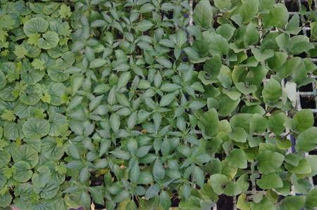 greenery: Greenery landscape Stock Photo