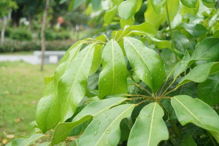 Les plantes vertes et des feuilles vertes