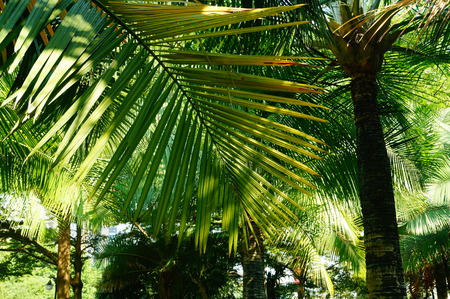 palm: palm leaves Stock Photo