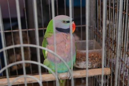caged: A parrot in a cage