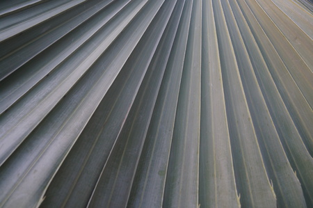 garden features: Palm leaves