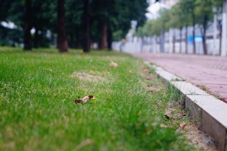 sidewalks: Sidewalks and green belt landscape