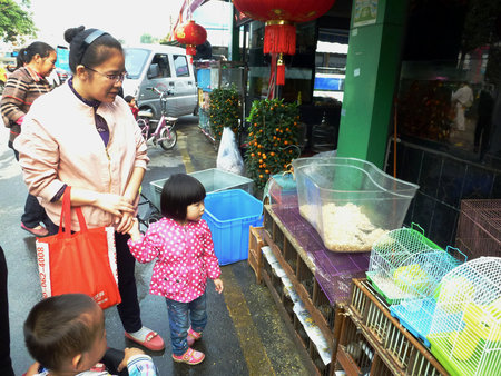 hamsters: Chinese mothers with girls in the pet market to see hamsters