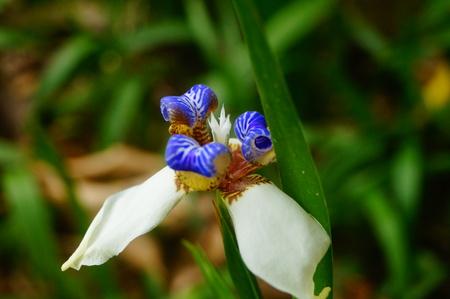 White flower in a garden Фото со стока - 121543432