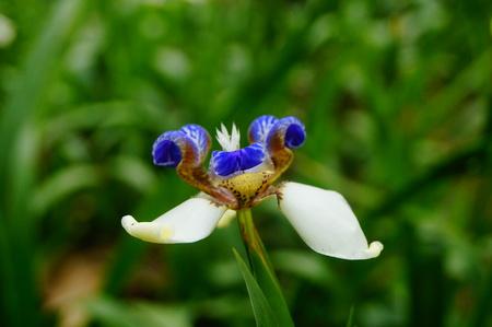 White flower in a garden 写真素材