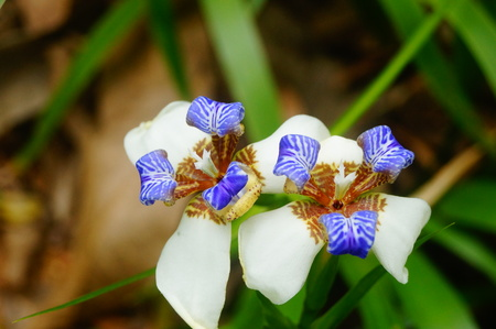 White flowers in a garden Imagens - 121543407
