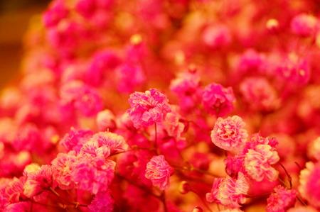 Babys-breath flowers