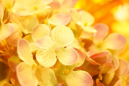 artificial flowers Imagens - 87757534