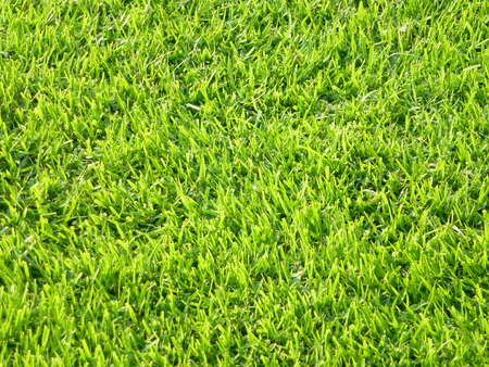 green lawn 写真素材