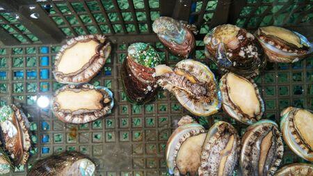 Fresh abalone Фото со стока - 145514032