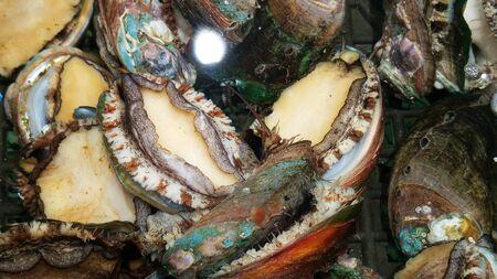 Fresh abalone Фото со стока - 145513987