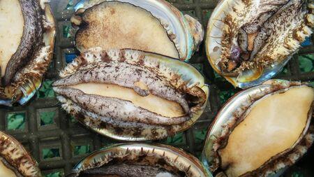 Fresh abalone Фото со стока - 145514011