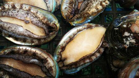Fresh abalone Фото со стока - 145514065