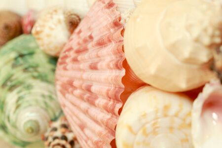 Focus shell of shellfish soft light Banco de Imagens - 128478218