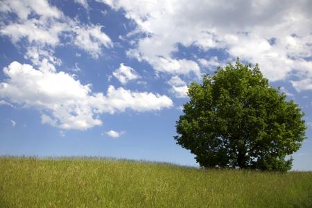Lone tree Stock Photo
