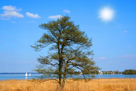 A lone tree by the lake in Autumn Stock Photo - 16479521