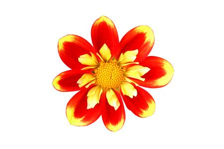 Orange-red flower isolated